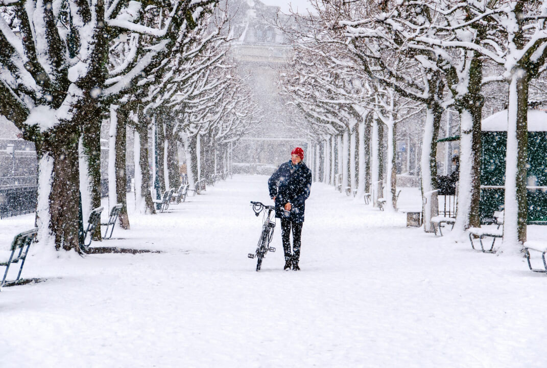 sneplov